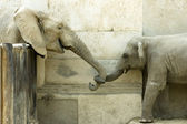 Elephants' Love — Stock Photo