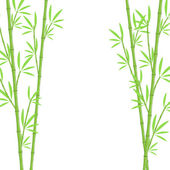 Bamboo background — Stock Vector