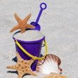 Beach Bucket with Starfish and Sea Shell - Stockfoto
