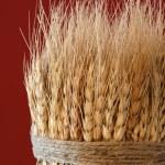 Sheaf of Wheat — Stock Photo