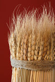 Sheaf of Wheat — Stock Photo
