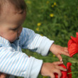 Stock Photo: Little child girl looking on poppy