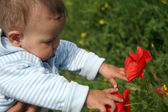 Little child girl looking on poppy — Stock Photo