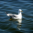 Stock Photo: Seagull On Maspalomas Nature Reserve