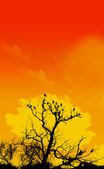 Orange Sky And Tree Foreground — Stock Photo