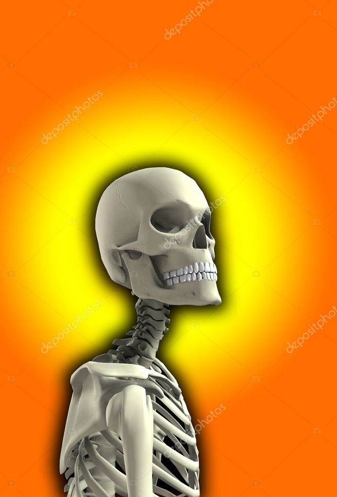 Close up of a skeleton for Halloween. — Stock Photo #2561718