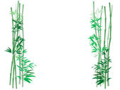 Bamboo Thicket Background — Stock Photo