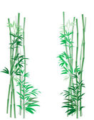 Bamboo Thicket Vertical — Stock Photo