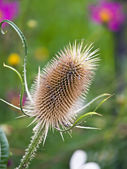 Prickle — Stock Photo