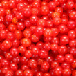 Viburnum background — Photo