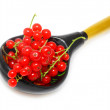 Red currants - Stock Photo