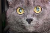 Portrait of a cat — Stock Photo