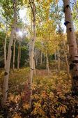 Sun peeks through autumn color — Stock Photo