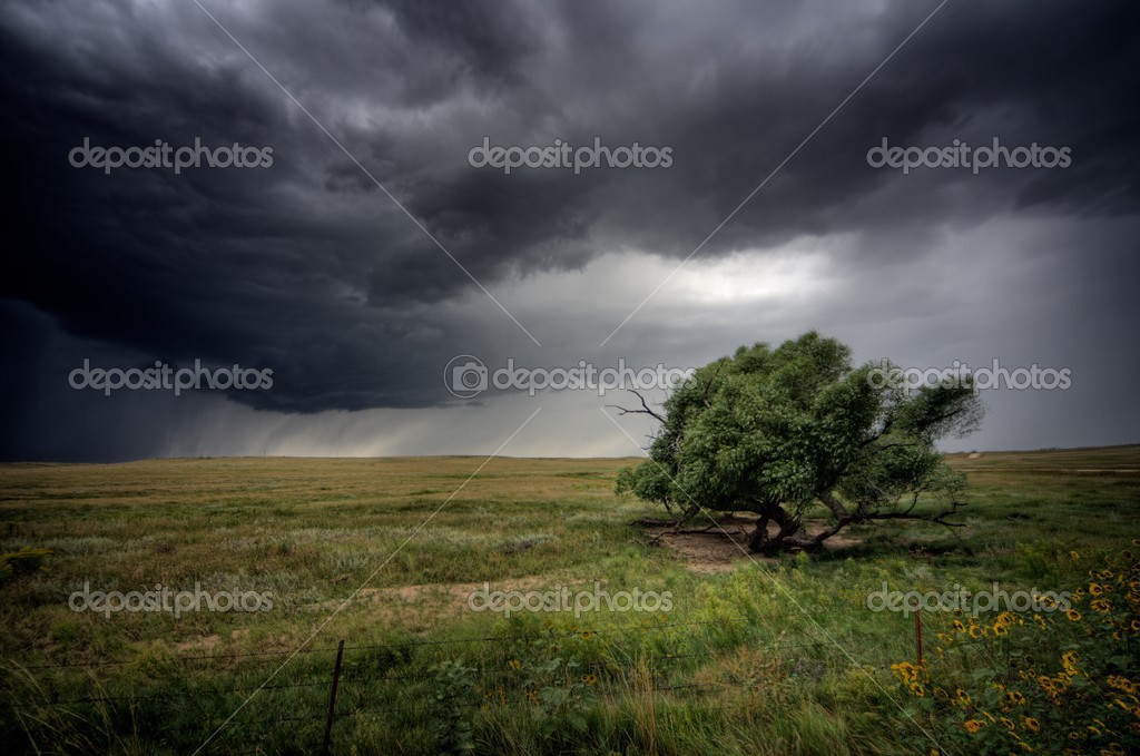 A tree is battered by the strong winds ahead of a severe storm. — Stock Photo #2535020