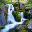 Mountain creek — Stock Photo