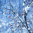 Apples on tree and first snow — Stock Photo #2643490