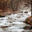 Stream in autumn forest — Stock Photo #2648139