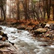 Stream in autumn forest — Stock Photo #2648379