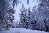 Snowfall in winter forest — Stock Photo