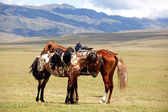 Two nomadic horses — Stock Photo
