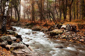 Stream in autumn forest — 图库照片