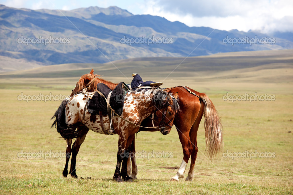 Two nomadic horses in summer mountains  Stock Photo #2646260