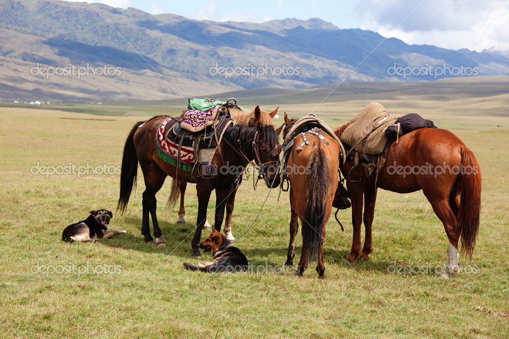 Group nomadic horses and dogs — Photo #2646278