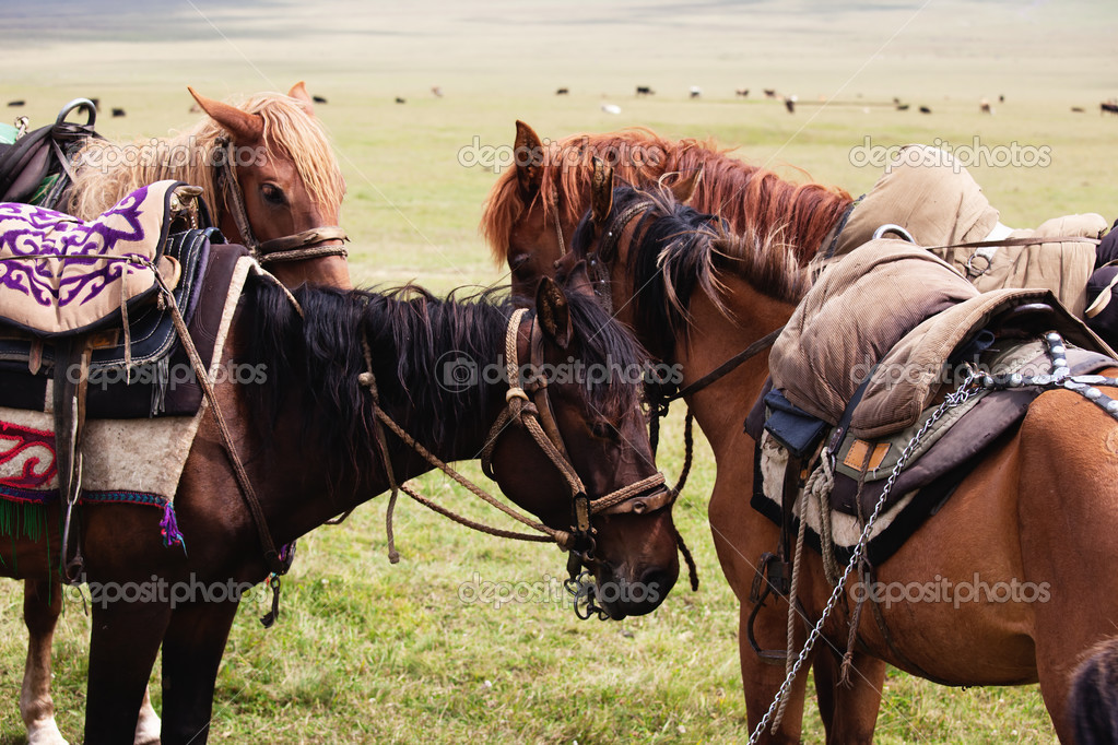 Group nomadic horses close-up — Zdjęcie stockowe #2646381