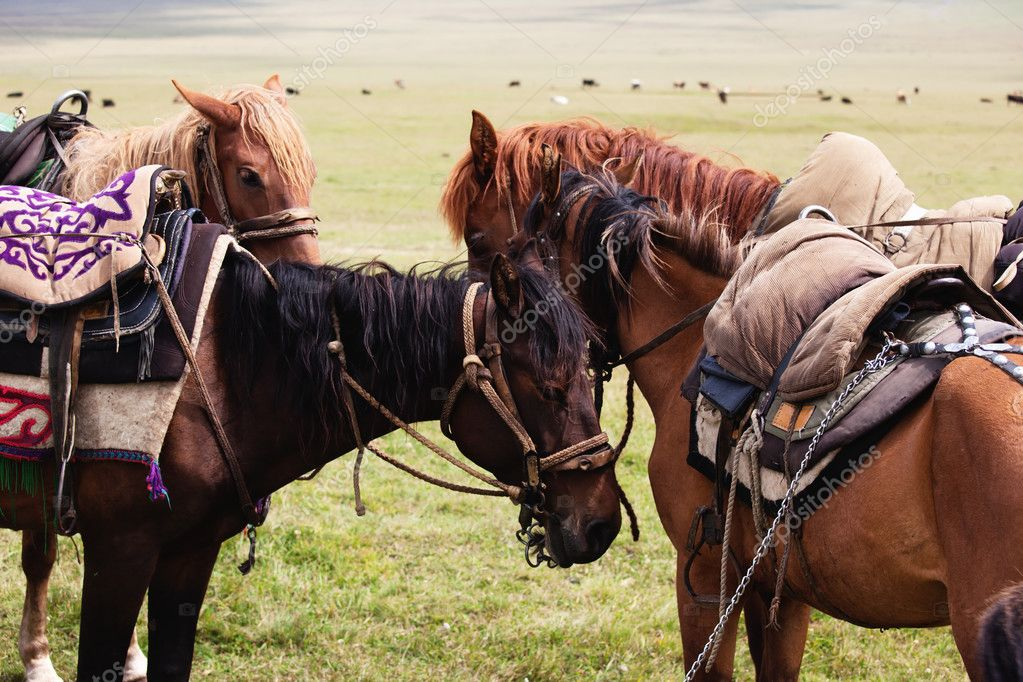 Group nomadic horses close-up — Foto Stock #2646381