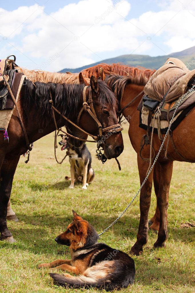 Group nomadic horses and dogs — Foto Stock #2646421