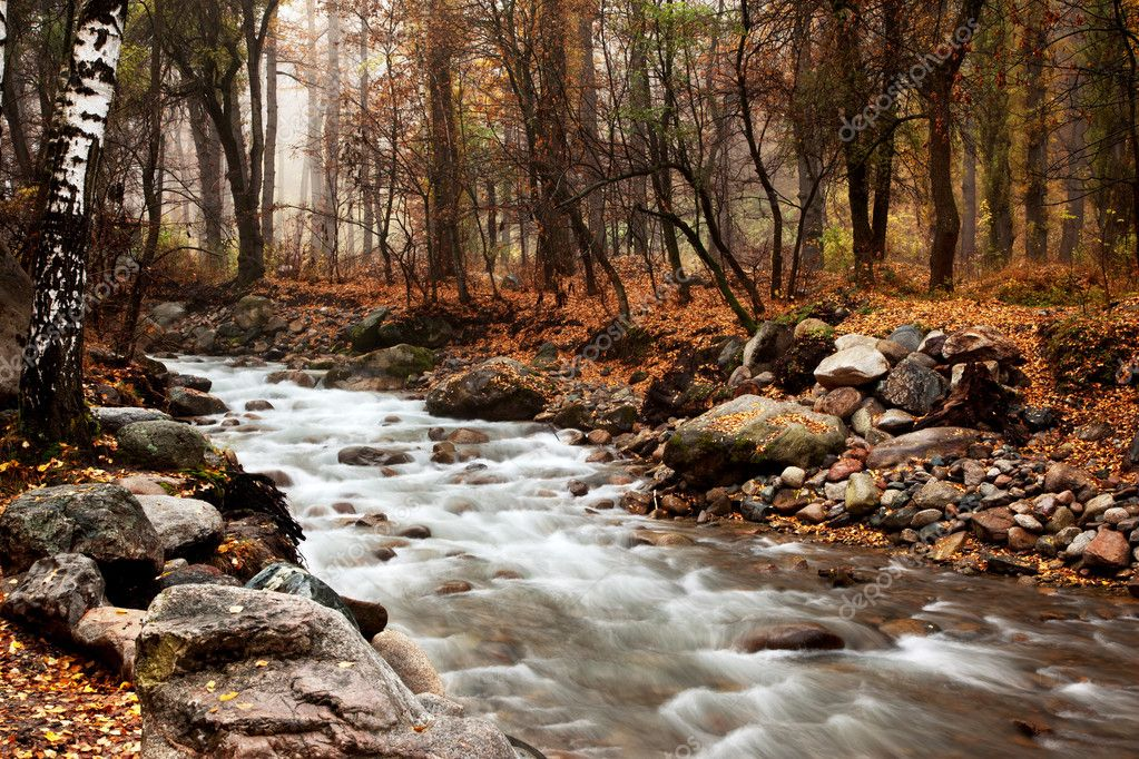 Stream in the autumn forest — Stok fotoğraf #2648379
