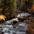 River in autumn forest — Stock Photo #2651444