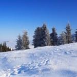 Winter rural landscape — Stock Photo #2669696