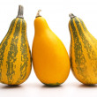 Group of small pumpkin — Stockfoto