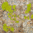 Green lichen on rock texture — Stock Photo #2678292