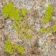 Stock Photo: Green lichen on rock texture