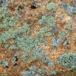 图库照片: Green and cylichen on rock texture