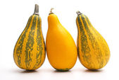 Group of small pumpkin — Stock Photo