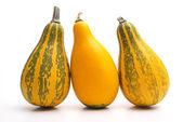 Gruppe von kleinen pumpkin — Stockfoto
