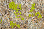 Green lichen on rock texture — Stock Photo