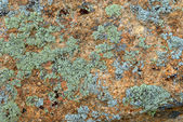 Green and cyan lichen on rock texture — Stock Photo