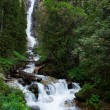 Waterfall in mountain forest — Stock Photo