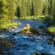 Mountain river and forest — Stock Photo