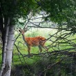 Wild spotter deer in forest — Stock Photo #2687868