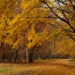 Maple path in autumn park — Stock Photo