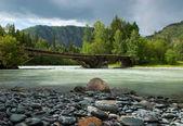 Na břehu horské řeky — Stock fotografie