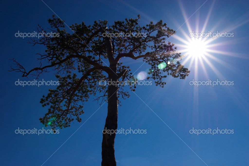 Sunbeams and silhouette tree — Stock Photo #2680282