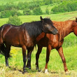 Royalty-Free Stock Photo: Two horses