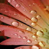 Water droplets on colorful flower — Stock Photo