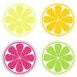 Stock Vector: Citrus fruit slices isolated on white